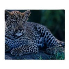 Young Leopard (Panthera pardus), lyi Throw Blanket