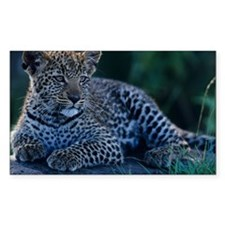 Young Leopard (Panthera pardus Decal