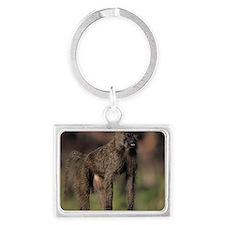 Olive baboon (Papio anubis), on Landscape Keychain