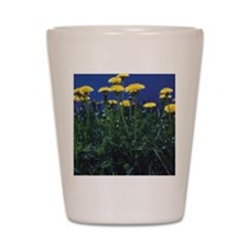 Dandelions in a field, California, USA Shot Glass