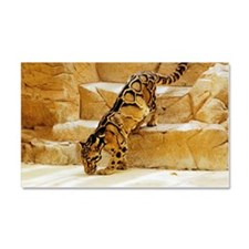 Clouded Leopard stepping down t Car Magnet 20 x 12