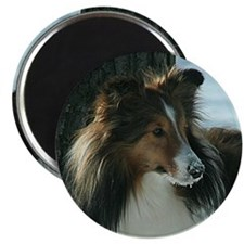 Winter Day Sheltie Magnet