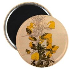 Gorse by Mackintosh Magnet