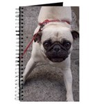 Pugnicious Journal