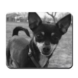 Chihuahua Mousepad