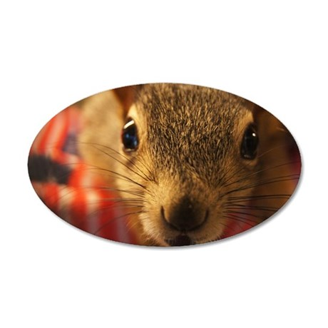 squirrelcloseup 35x21 Oval Wall Decal