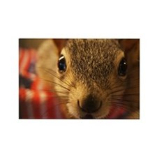 squirrelcloseup Rectangle Magnet