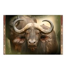 African Cape Buffalo Postcards (Package of 8)