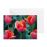 Cute Spring Greeting Cards (Pk of 10)