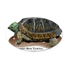 Desert Box Turtle Oval Car Magnet