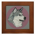 Gray Alaskan Malamute Framed Tile