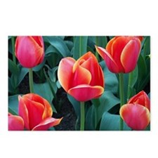 Cool Tulips Postcards (Package of 8)