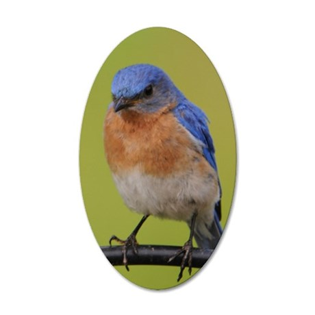 1100x1500eastern bluebird 35x21 Oval Wall Decal