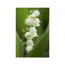 Lily of the valley Rectangle Magnet