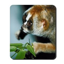 Portrait of slow loris Mousepad
