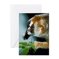 Portrait of slow loris Greeting Card