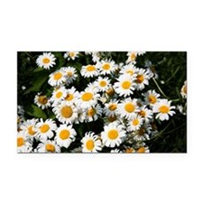 Blooming daisies Rectangle Car Magnet