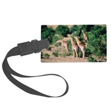 Giraffes on savanna, Kenya Luggage Tag