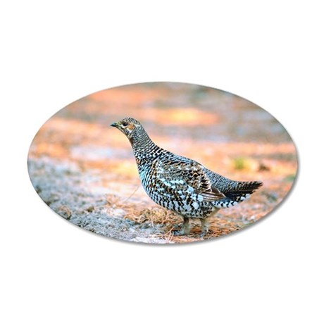 Spruce grouse 35x21 Oval Wall Decal