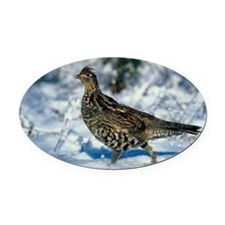 Jupiterimages Oval Car Magnet