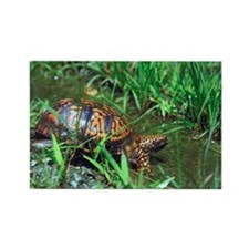 Eastern box turtle Rectangle Magnet