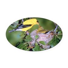 Bird feeding offspring Oval Car Magnet