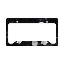 Jupiterimages License Plate Holder