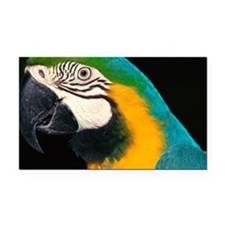 Blue and gold macaw Rectangle Car Magnet