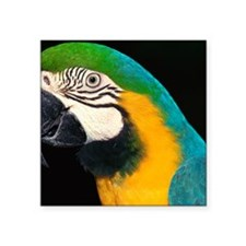 """Blue and gold macaw Square Sticker 3"""" x 3"""""""