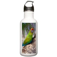 Great green macaw on a Water Bottle