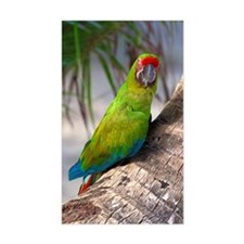 Great green macaw on a tree Decal