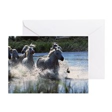 Wild camargue horses Greeting Card