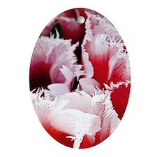 pink tulip mini poster Oval Ornament