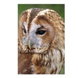 ...Tawny Owl... Postcard (Package of 8)