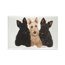 Scottish Terrier - 3 puppies Rectangle Magnet
