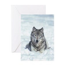 Portrait of gray wolf lying in snow Greeting Card