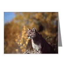 Mountain lion Note Cards (Pk of 10)