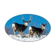 Mule deer Wall Decal