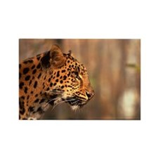 Profile of Siberian leopard Rectangle Magnet