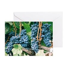 Wine Country Grapes Greeting Card