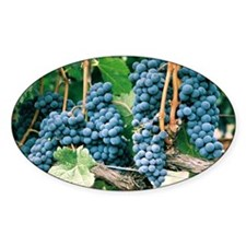 Wine Country Grapes Decal