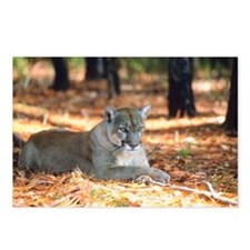 Panther Postcards (Package of 8)