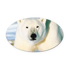 23872548 Oval Car Magnet