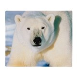 Polar bear Fleece Blankets