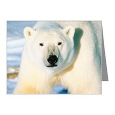 23872548 Note Cards (Pk of 20)