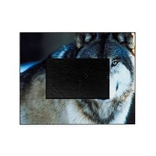 Timber wolf Picture Frame