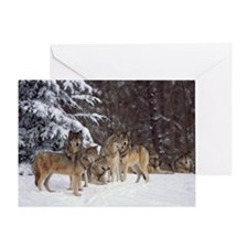 Pack of gray wolves in snow Greeting Card