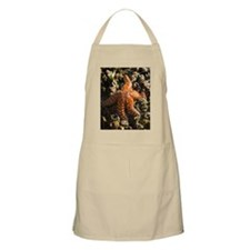 Starfish, San Pedro, California, USA Apron