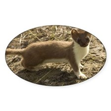 Cute weasel Decal