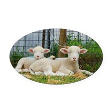 Buddy Lambs-signed by photographer Oval Car Magnet